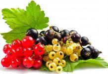 смородина польза и вред для здоровья