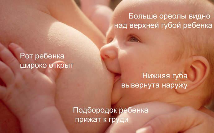 правильное прикладывание новорожденного при грудном вскармливании