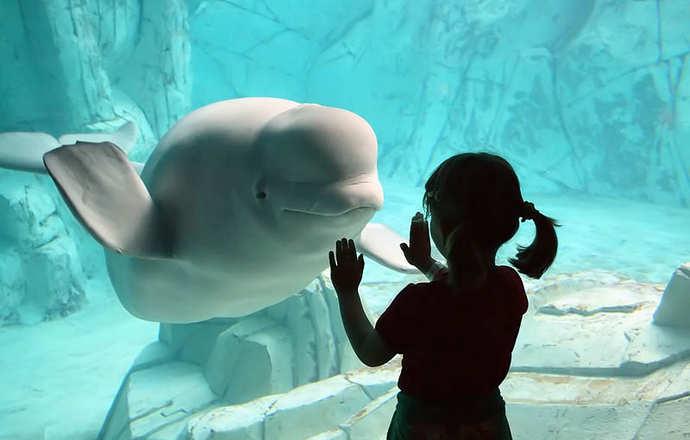 аквариум в валенсии и его обитатели