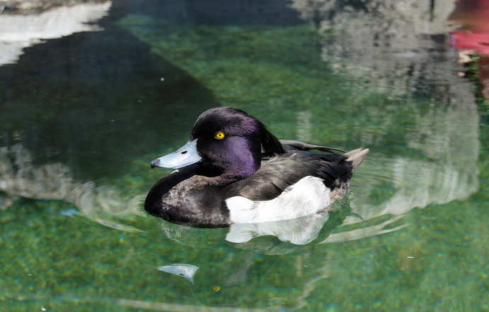 утки в павильоне водно-болотистой климатической зоны