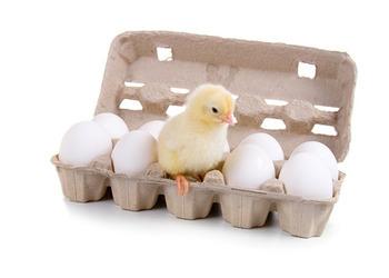 прикорм ребенка желтком куриным или перепелиным