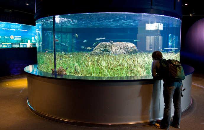 биотопы в аквариумах