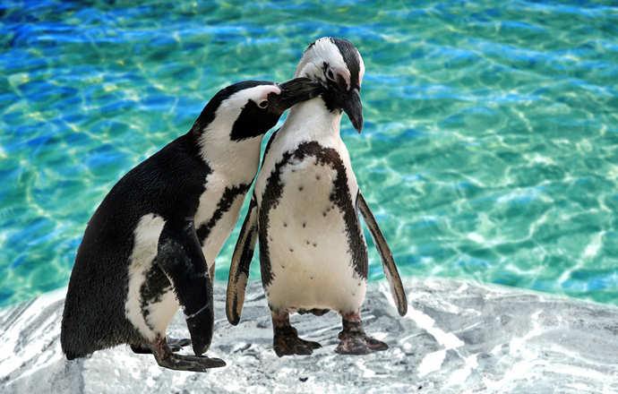 пингвины в павильоне океанариума