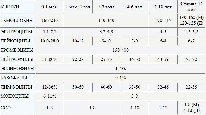 Гранулоциты в анализе крови норма у детей анализ мочи норма для ребенка 3 лет