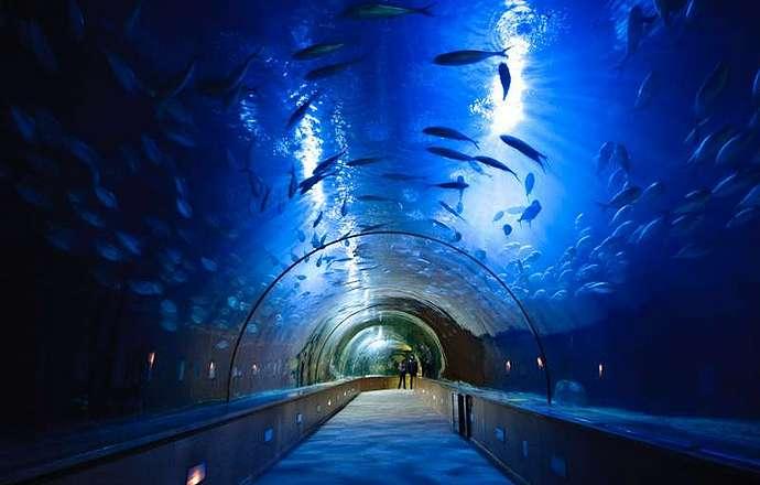 валенсия аквариум